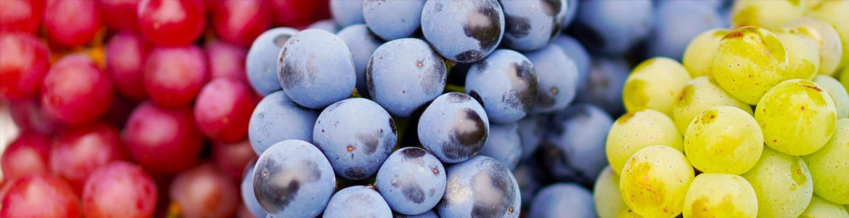 All Our wines - Birdie Vinos